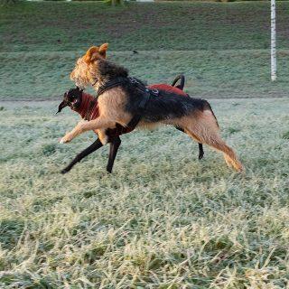 Hundespaß die zweite #hundeschule #mannheim #training #heidelberg#zaraverzaubert #bardino #hundeliebe #hund#hunde#hundeportrait #freundaufvierpfoten #hundewelpen #tierheimhunde #claudiakschulz #hundeerziehung #auslandshunde#hundespass #hundespaziergang #neckarwiese #positiveshundetraining