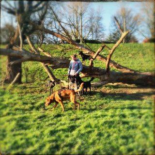 Morgenspaziergang #hundeschule #mannheim #training #heidelberg#zaraverzaubert #bardino #hundeliebe #hund#hunde#hundeportrait #freundaufvierpfoten #hundewelpen #tierheimhunde #claudiakschulz #hundeerziehung #auslandshunde