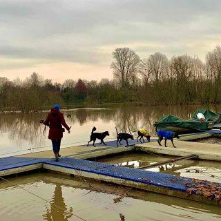 Abenteuer Alltag - für Hunde mega spannend! #hundeschule #mannheim #training #heidelberg#zaraverzaubert #bardino #hundeliebe #hund#hunde#hundeportrait #freundaufvierpfoten #hundewelpen #tierheimhunde #claudiakschulz #hundeerziehung #auslandshunde #hundetraining #hundetrainerin #hundeliebe #hundeimwasser