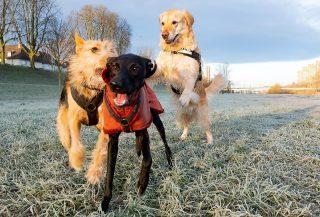 Da waren es plötzlich drei! Es ist so schön, wenn Hunde sich gut verstehen. #hundeschule #mannheim #training #heidelberg#zaraverzaubert #bardino #hundeliebe #hund#hunde#hundeportrait #freundaufvierpfoten #hundewelpen #tierheimhunde #claudiakschulz #hundeerziehung #auslandshunde#hundespaziergang #hundespiel #goldenretriever #podencomix #galgomix