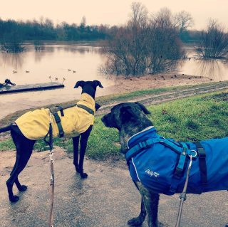 So ne Frechheit, jetzt iss die Neckarwiese weg...🏊♀️🤿 #hundeschule #mannheim #training #heidelberg#zaraverzaubert #bardino #hundeliebe #hund#hunde#hundeportrait #freundaufvierpfoten #hundewelpen #tierheimhunde #claudiakschulz #hundeerziehung #auslandshunde #hundetraining #hochwasser #hundemantel