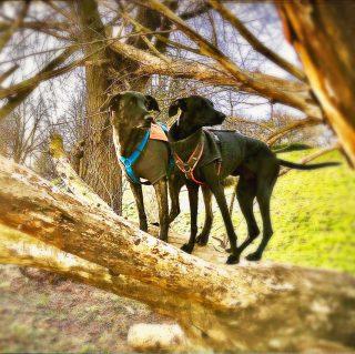 Lieblingshunde #hundetraining #hund #mannheim #neckar #heidelberg #tierfotografie #tiere #dogsofinstagram #dogs #bardino #podenco #galgo #lieblingshund #morgenstund #hundeschnauze