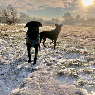 Kalt, kälter am kältesten, aber die Hunde hatten trotzdem ihren Spaß. Meine Südländer wie immer gut eingepackt. #hundeschule #mannheim #training #heidelberg#zaraverzaubert #bardino #hundeliebe #hund#hunde#hundeportrait #freundaufvierpfoten #hundewelpen #tierheimhunde #claudiakschulz #hundeerziehung #auslandshunde #hundetraining #hundetrainerin