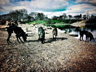 Wenn Hunde zu Schafen werden #hundeschule #mannheim #training #heidelberg#zaraverzaubert #bardino #hundeliebe #hund#hunde#hundeportrait #freundaufvierpfoten #hundewelpen #tierheimhunde #claudiakschulz #hundeerziehung #auslandshunde