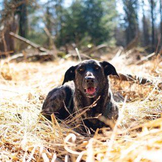 Frohe Ostern und aufregende Tage mit euren vierbeinigen Freunden zaraverzaubert #dog #fujifilm#bardino #rescuedog #shelterdog #dogphotography #dog_features #dailywoof #hundefotografie #hundeliebe #hund #tierfotografie #bestwoof #tier_fotos #lanzarote #spanienhund #bestdogever #hunde #hundeportrait #freundaufvierpfoten #podenco #lovemydog #naturephotography #podencomix#hundeerziehung#hundetraining #mannheim #heidelberg #ludwigshafen #