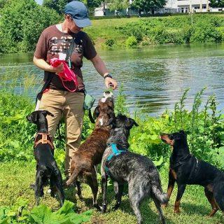Mittagsgassi mit der Gang #dog ##bardino #rescuedog #dogphotography#dog_features # #hundefotografie #hundeliebe #hund #tierfotografie #bestwoof #tier_fotos #lanzarote #spanienhund #bestdogever #dogsofinstagram #hunde #hundeportrait #freundaufvierpfoten #podenco #lovemydog #naturephotography #podencomix#galgo #mannheim