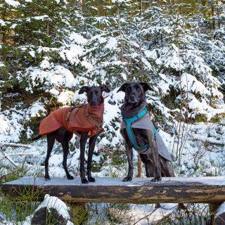 Die Kanarengang im Winterland #hundeschule #mannheim #training #heidelberg#zaraverzaubert #bardino #hundeliebe #hund#hunde#hundeportrait #freundaufvierpfoten #hundewelpen #tierheimhunde #claudiakschulz #hundeerziehung #auslandshunde #hundeimschnee #hundemantel #hundeimwinter #hundetraining