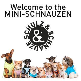 Ab dem 10.April gibt es eine eigene Minigruppe mit Welpen und Junghunden bis zu 5 KG. Treffpunkt ist immer Samstag morgens in Käfertal. Anmelden über www.schulzundschnauze.de/kontakt #hundeschule #mannheim #training #heidelberg#zaraverzaubert #bardino #hundeliebe #hund#hunde#hundeportrait #freundaufvierpfoten #hundewelpen #tierheimhunde #claudiakschulz #hundeerziehung #auslandshunde#kleinehunde #minidogs #chihuahua #minipudel #cockerpuppy #maltipoo