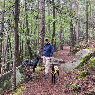 Mysthische Herbst-Pfalzwanderung im August gescoutet-war wunderschön #pfälzerwald #kalmit #bardino #podenco #podencomix #galgo #mannheim #wanderungmithund #hundetrainer #lieblingshund #hundeliebe #hunde #hundefotografie #hundeaufinstagram