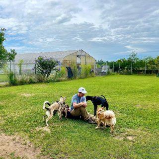 Im Gespräch… #dog #bardino #rescuedog #shelterdog #dogphotography #dog_features # #hundefotografie #hundeliebe #hund #tier_fotos #lanzarote #hunde #hundeportrait #freundaufvierpfoten #podenco #lovemydog #podencomix#silkenwindsprite #hundeschule #hundetraining #hundetrainerin #mannheim